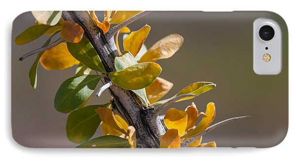 Autumn Ocotillo IPhone Case by Beverly Parks
