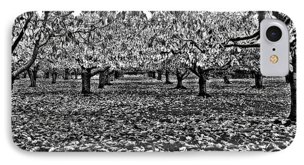 Autumn Orchard  IPhone Case by Thomas Born