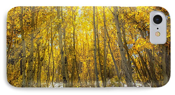 Autumn Rays IPhone Case