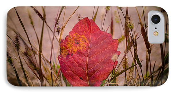 IPhone Case featuring the photograph Autumn Rest by Julie Clements