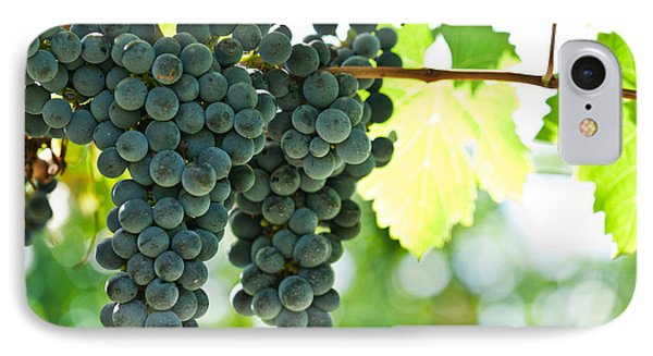 Autumn Ripe Red Wine Grapes Right Before Harvest Phone Case by Ulrich Schade