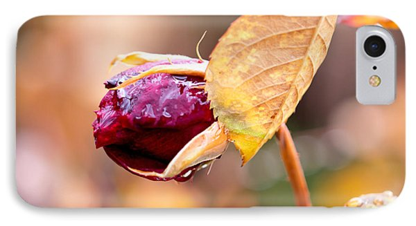IPhone Case featuring the photograph Autumn Rosebud by Rona Black