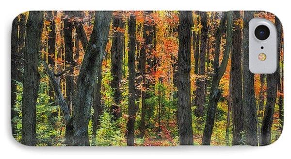 Autumn Sugar Maple, Yellow Birch And Phone Case by Thomas Kitchin & Victoria Hurst