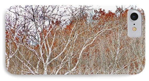 IPhone Case featuring the photograph Autumn Sycamores by Bruce Patrick Smith