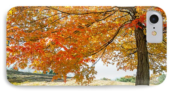 Autumn Tree - 2 IPhone Case