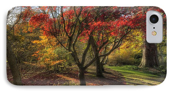Autumn Tree Sunshine IPhone Case by Ian Mitchell