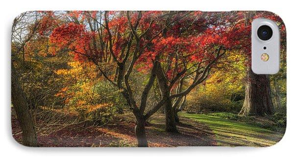 Autumn Tree Sunshine Phone Case by Ian Mitchell