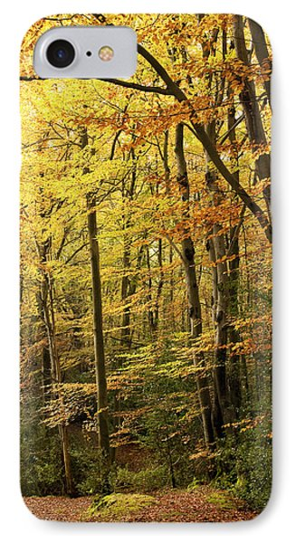 Autumnal Woodland Iv IPhone Case by Natalie Kinnear