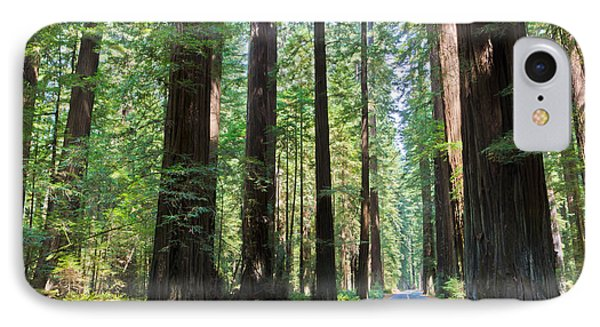 Avenue Of The Giants IPhone Case by Heidi Smith