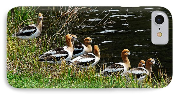 IPhone Case featuring the photograph Avocets by Sam Rosen