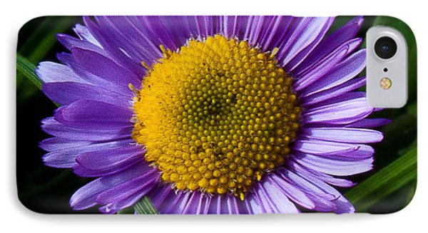 Awesome Daisy IPhone Case by Steven Reed