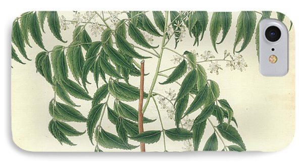 Azadirachta Indica IPhone Case by Natural History Museum, London