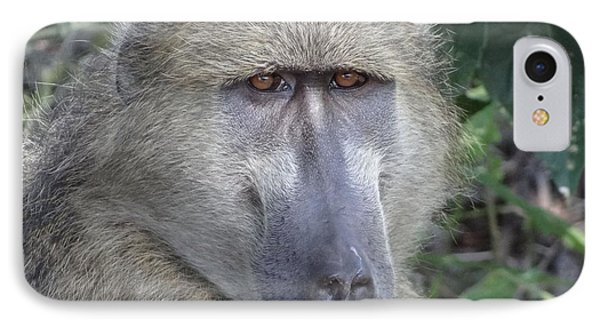 Baboon Portrait IPhone Case