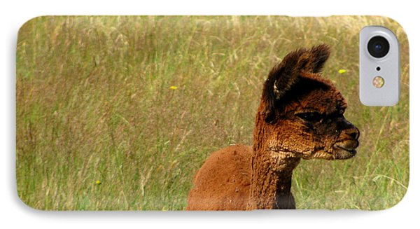 Baby Alpaca IPhone Case