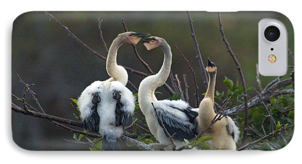 Baby Anhinga IPhone Case by Mark Newman