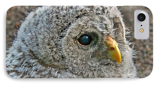 Baby Barred Owlet IPhone Case by Jennie Marie Schell