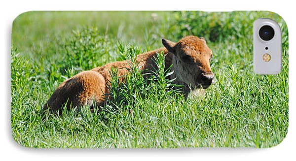 Baby Bison IPhone Case by Robert  Moss