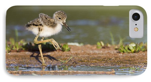 Baby Black-necked Stilt Exploring IPhone Case