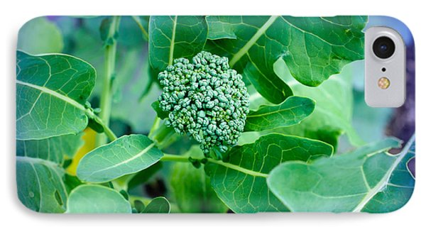 Baby Broccoli - Vegetable - Garden Phone Case by Andee Design