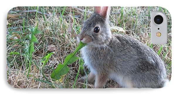 Baby Bunny Eating Dandelion #01 IPhone Case by Ausra Huntington nee Paulauskaite