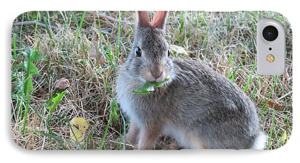 Baby Bunny Eating Dandelion #02 Phone Case by Ausra Huntington nee Paulauskaite