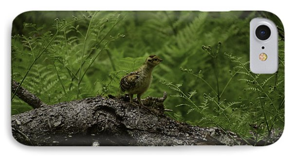 Baby Chick In Woods IPhone Case