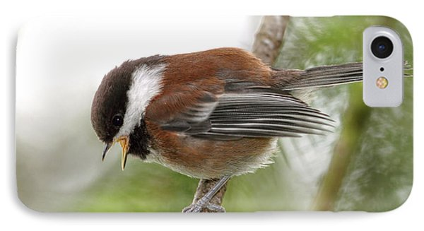 IPhone Case featuring the photograph Baby Chickadee Calling For Mom by Peggy Collins