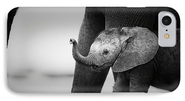 Baby Elephant Next To Cow  IPhone Case by Johan Swanepoel