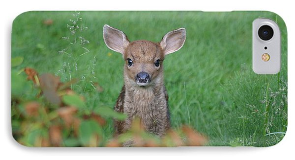 IPhone Case featuring the photograph Baby Fawn In Yard by Kym Backland