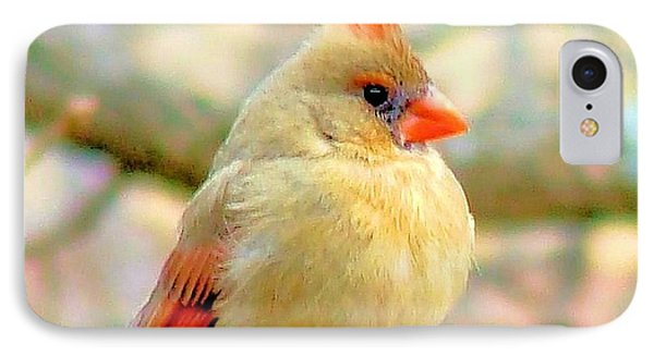 IPhone Case featuring the photograph Baby Female Cardinal by Janette Boyd