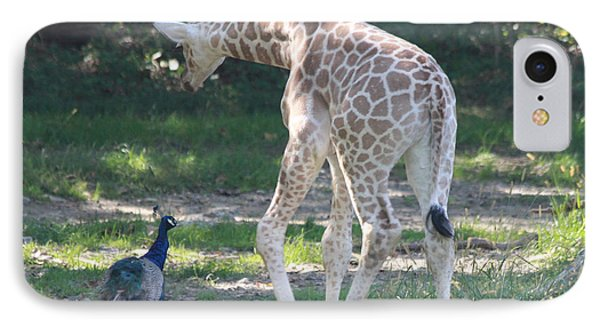 Baby Giraffe And Peacock Out For A Walk IPhone Case by John Telfer