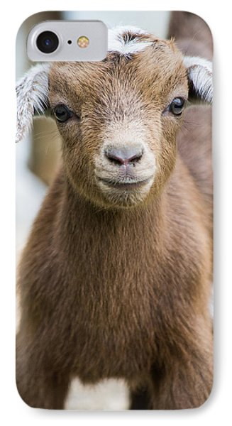 Baby Goat IPhone Case by Shelby  Young
