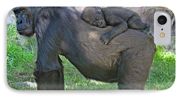 Baby Gorilla Sleeping On Mommys Back IPhone Case by Jim Fitzpatrick