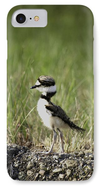 Baby Killdeer 2 IPhone 7 Case by Thomas Young