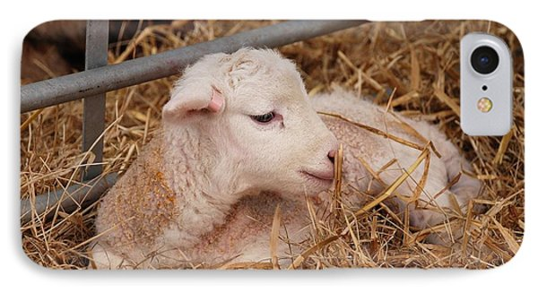 Baby Lamb IPhone Case