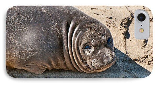 Baby Northern Elephant Seals Mirounga Angustirostris At The Piedras Blancas Beach Phone Case by Jamie Pham