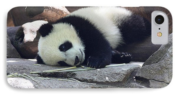 IPhone Case featuring the photograph Baby Panda by John Telfer