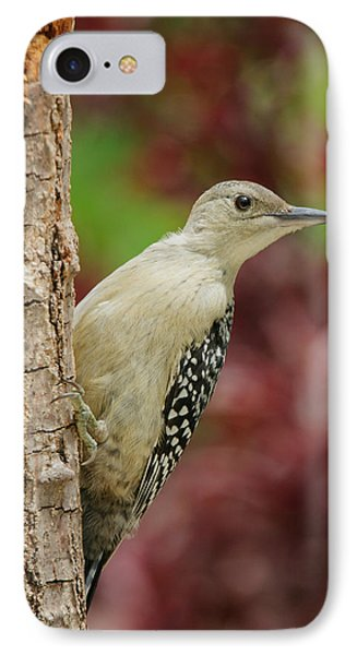 Baby Red Bellied Woodpecker Phone Case by Lara Ellis