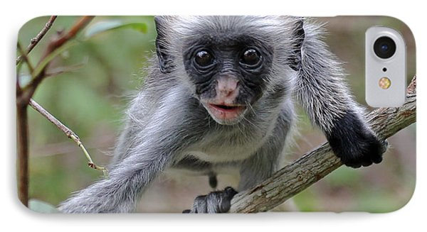 Baby Red Colobus Monkey IPhone Case by Tony Murtagh