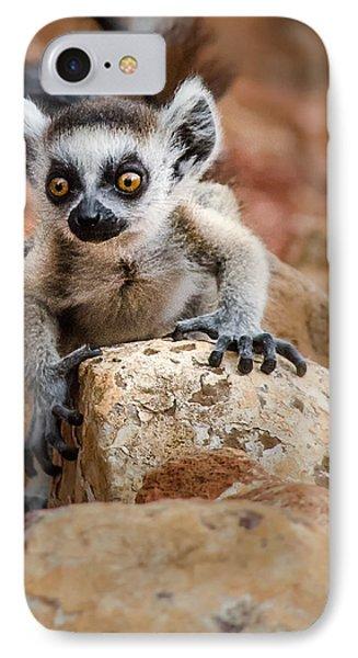 Baby Ringtail Lemur IPhone Case by Linda Villers