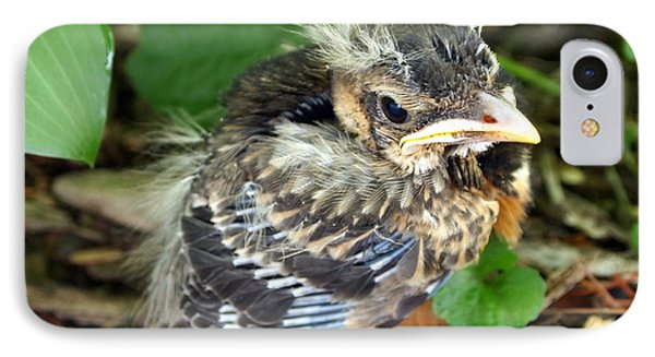 Baby Robin Among The Hosta's 2 IPhone Case by Deborah Fay