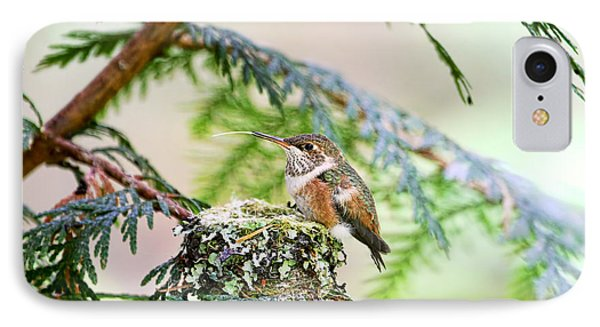 IPhone Case featuring the photograph Baby Rufous Hummingbird by Peggy Collins