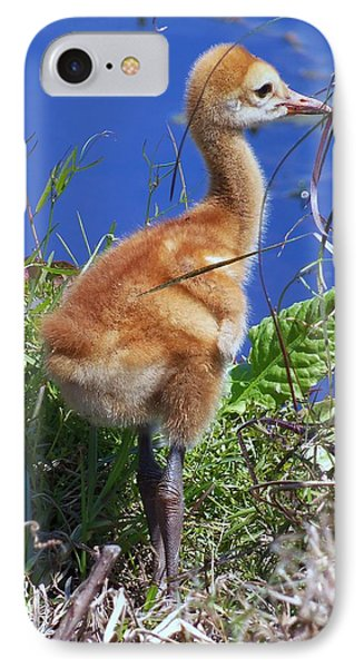 IPhone Case featuring the photograph Baby Sandhill Crane 064  by Chris Mercer