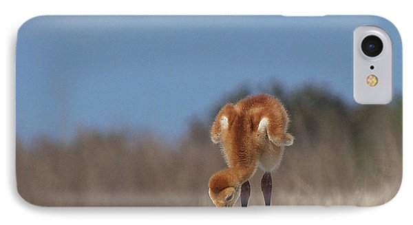 Baby Sandhill Crane 072 IPhone Case by Chris Mercer
