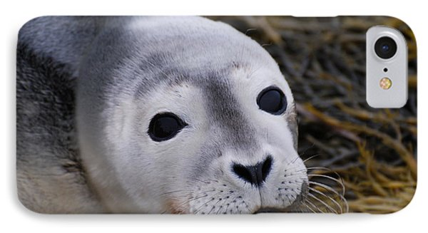 Baby Seal IPhone Case by DejaVu Designs