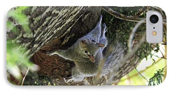 IPhone Case featuring the photograph Baby Squirrel On The Loose by Trina  Ansel