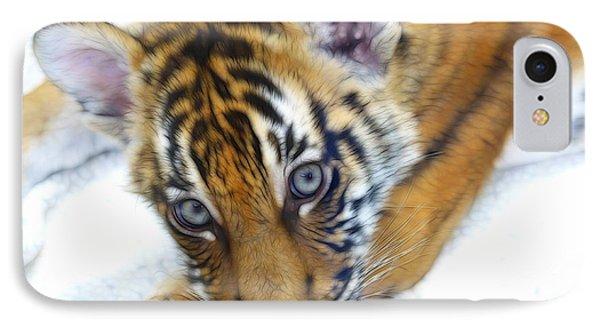 Baby Tiger IPhone Case by Steve McKinzie