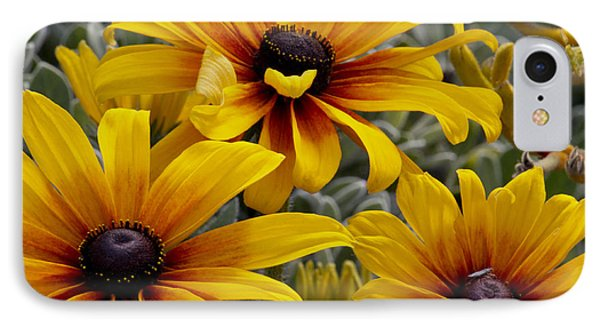 Back-eyed-susan IPhone Case by Ivete Basso Photography