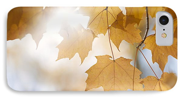 Backlit Fall Maple Leaves In Sunshine IPhone Case