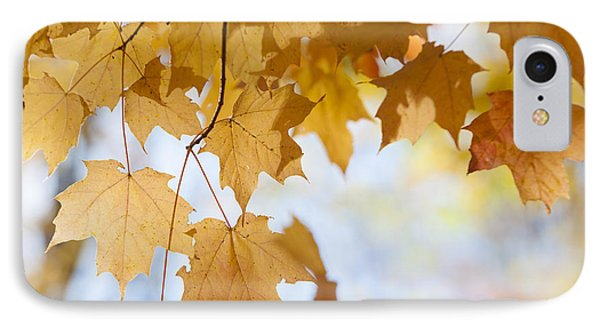 Backlit Maple Leaves In Fall Phone Case by Elena Elisseeva